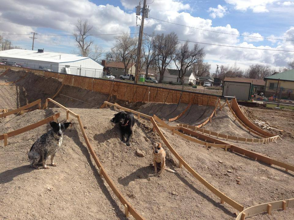 Site dogs: Noot, Joy & Heyla