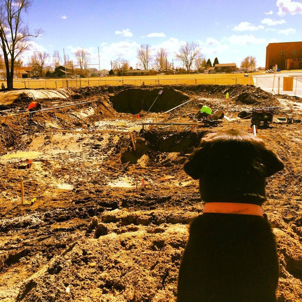 Joy the dog checks out the bowl construction