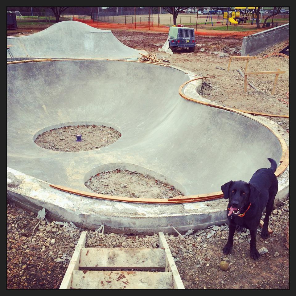 Joy the dog loves the pool