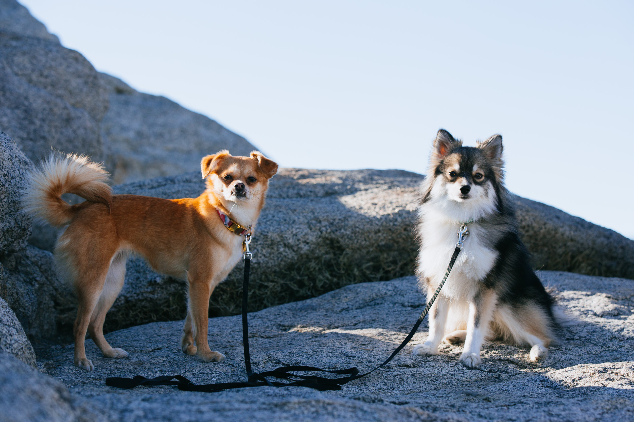 I typically trust the pups to hike off leash because they have learned and practiced good recall. But during breaks I will put a long leash on to keep them from wandering off.
