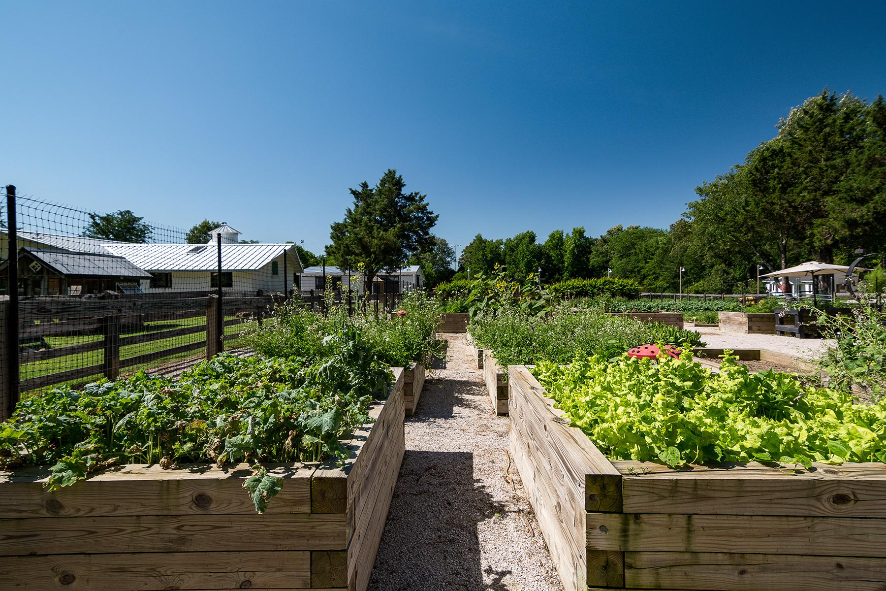 Lanier Farm-3.jpg