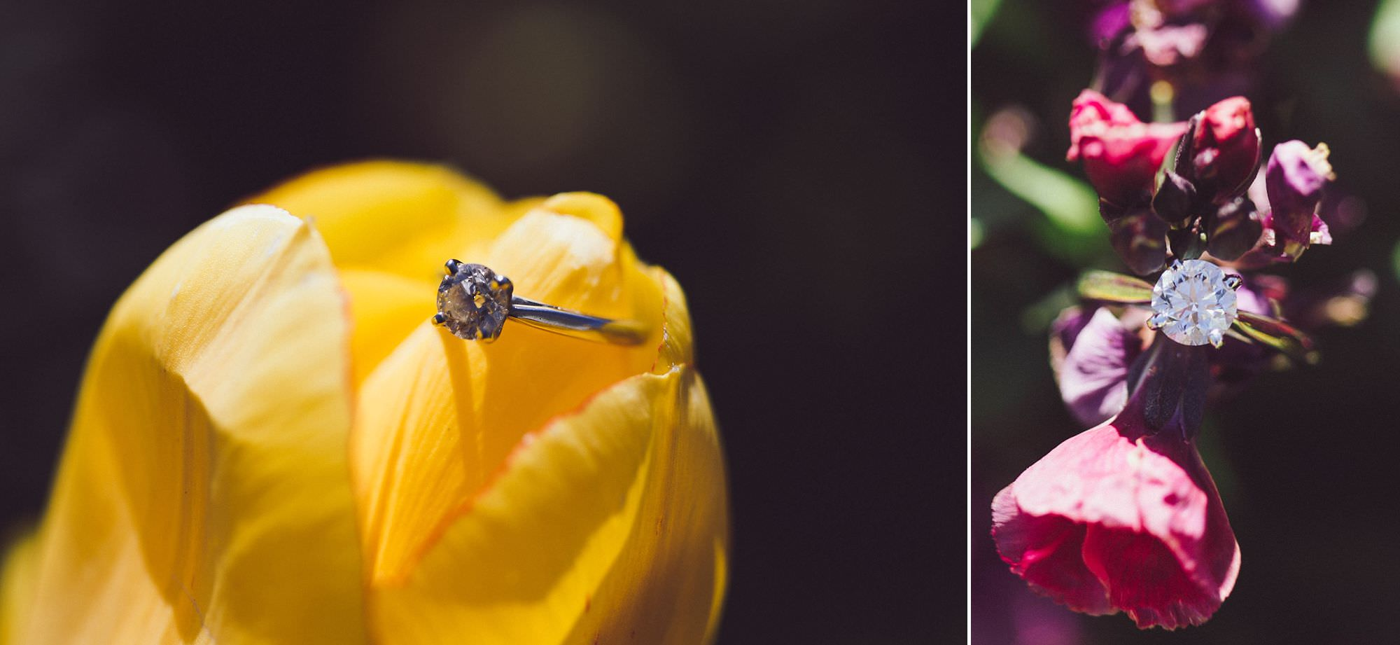 We found some beautiful spring flowers to take some macro photos of Elizabeth's beautiful engagement ring!