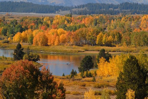 Yellowstone Fall.jpg
