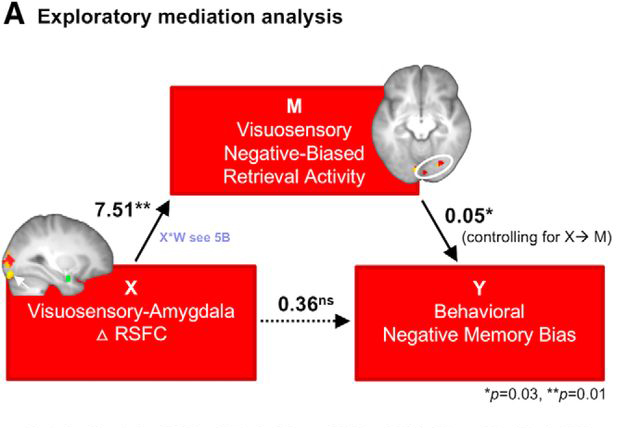Kark and Kensinger (2019) found that negative memory bias may be more likely when connections between amygdala and sensory regions are strong