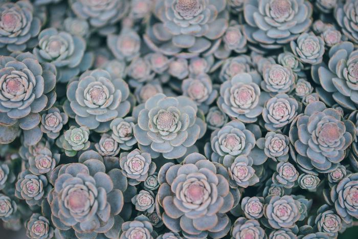 orlova-maria-1365053-unsplash-1.jpg