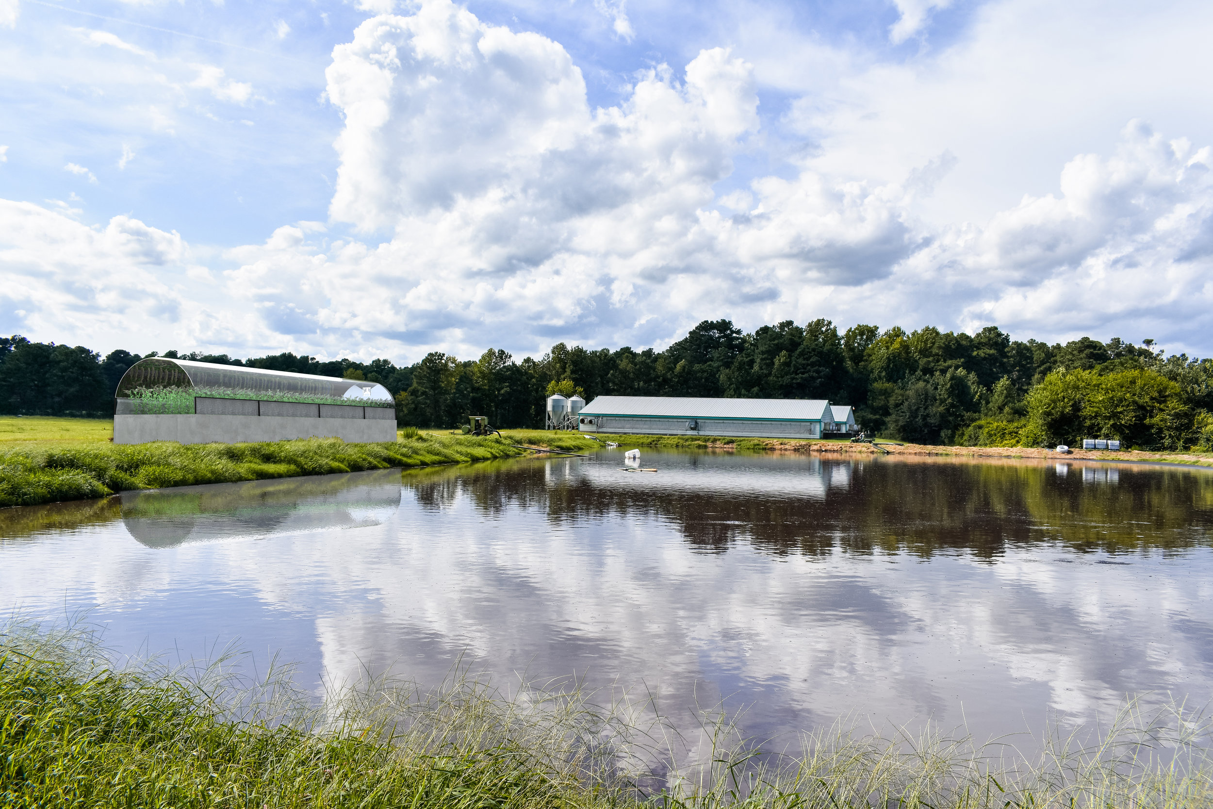 Constructed Wetlands Save North Carolina Farms Money, Time, and Process Sludge into clean fuel and fertilizer