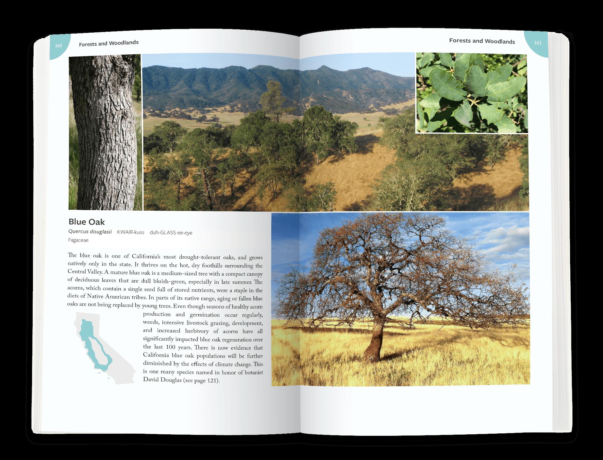 blue oak.png