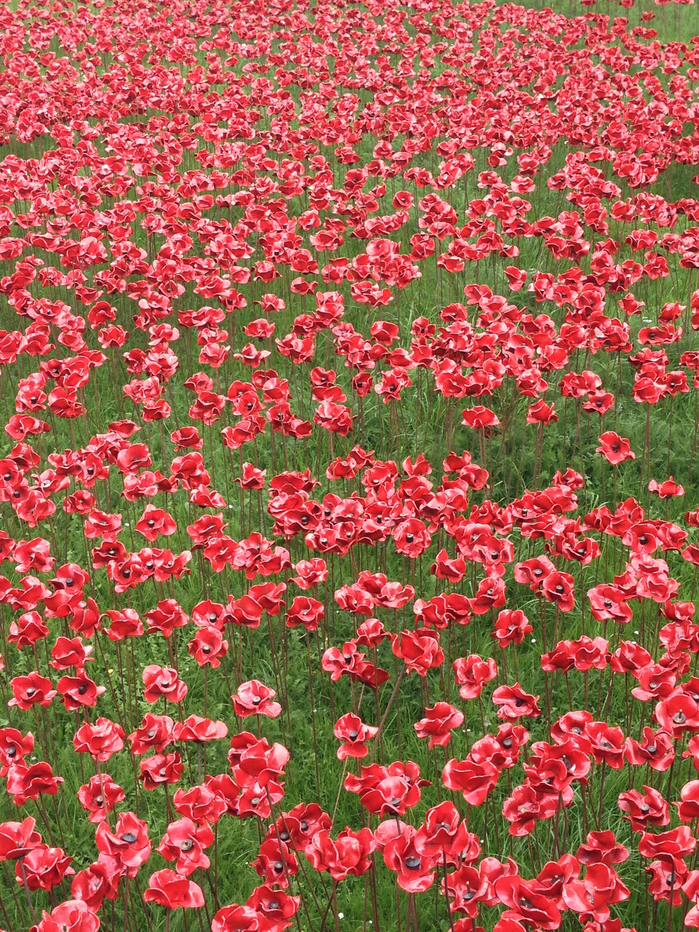 Poppies at The Tower of London.JPG