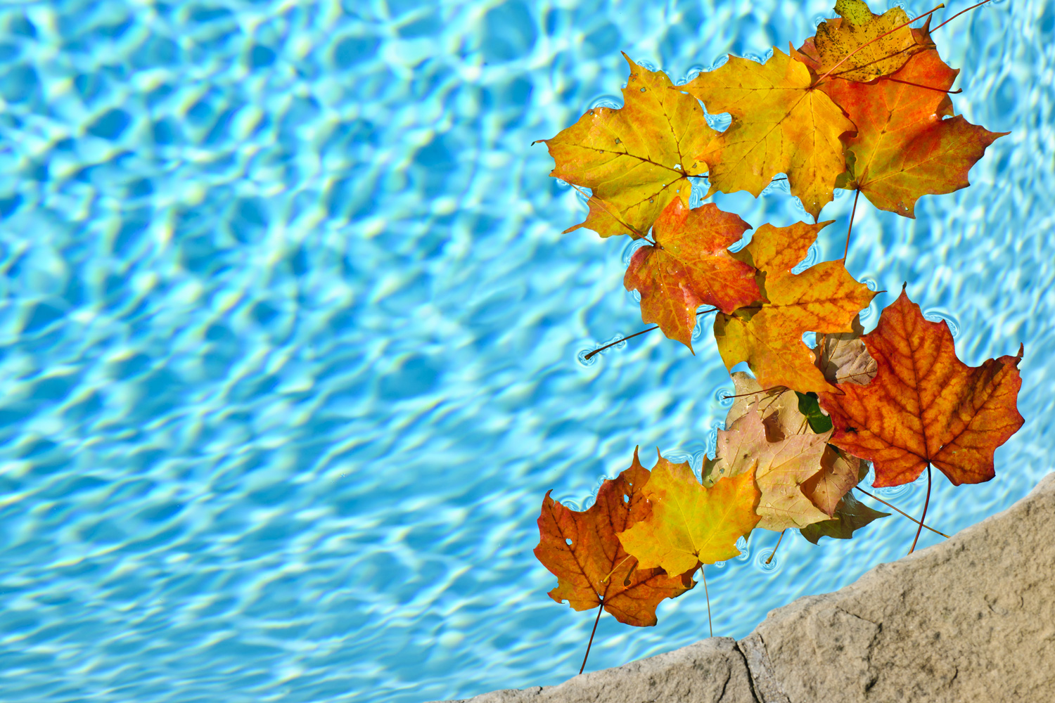 aveco-fall-pool-maintenance.jpg