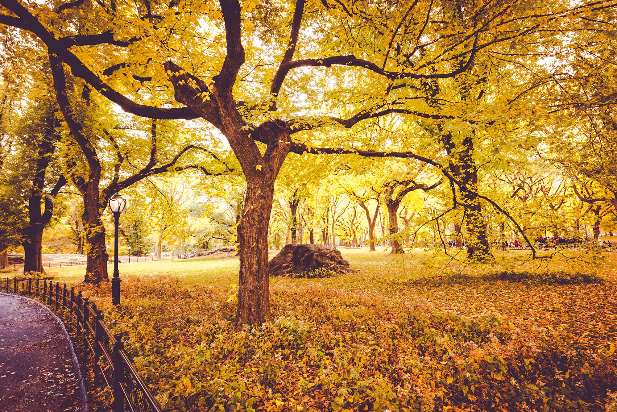 All the leaves are golden in Central Park, New York.