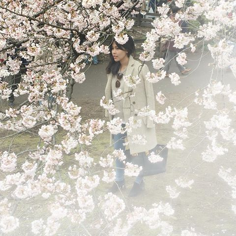 Where to see the cherry blossoms -