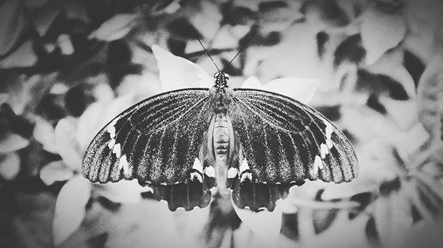 It's been a long time between butterflies. Welcome, friend.