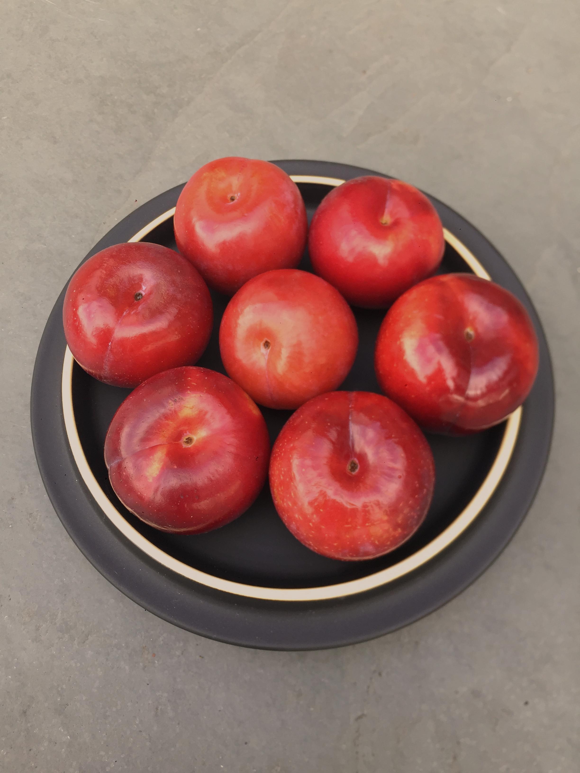 plums no k.png
