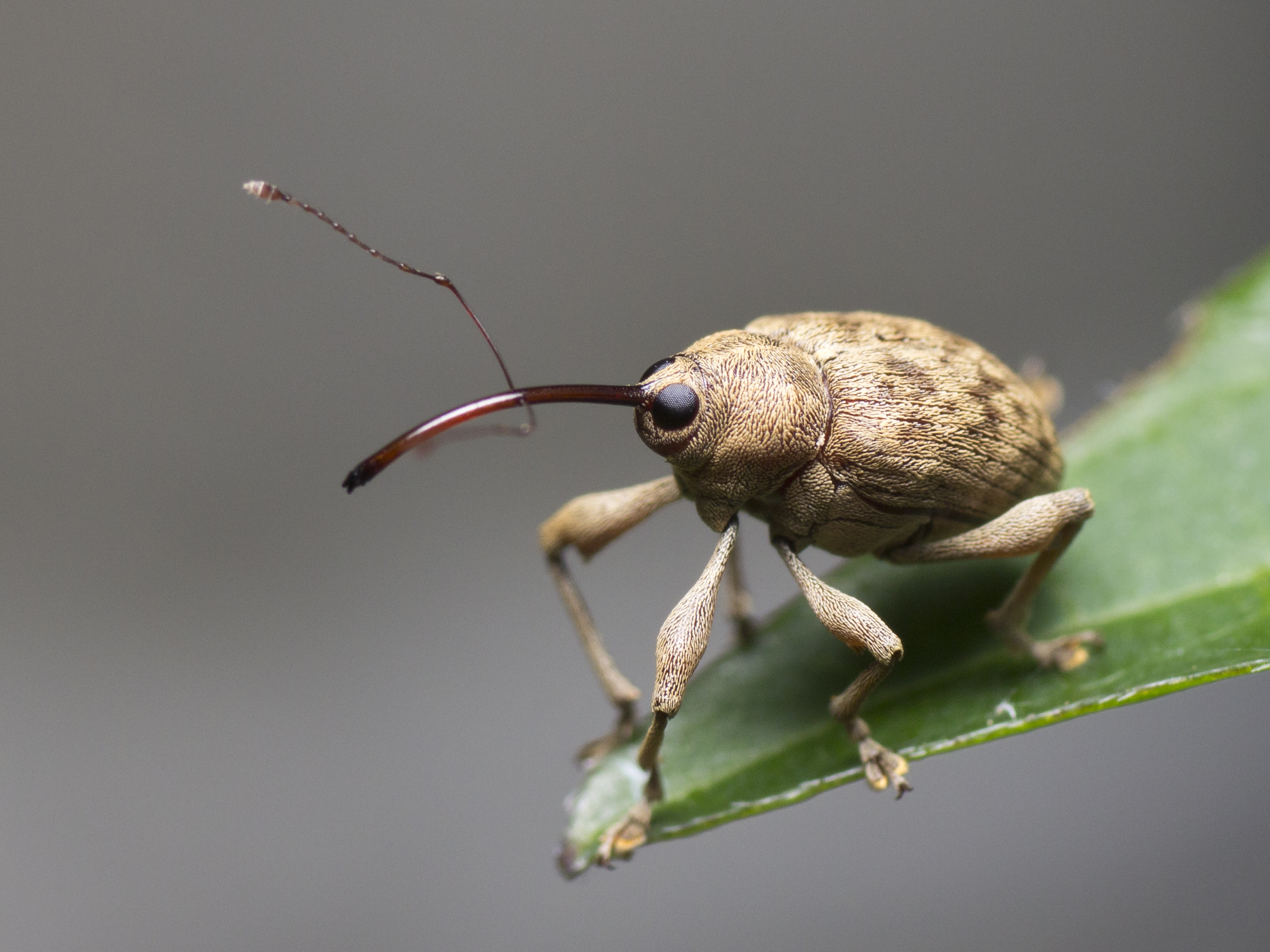 Insects and Other Invertebrates - Fun with macro