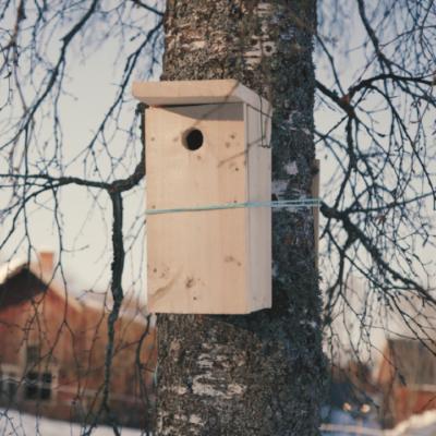 Fuglekasse - grovklipp.png
