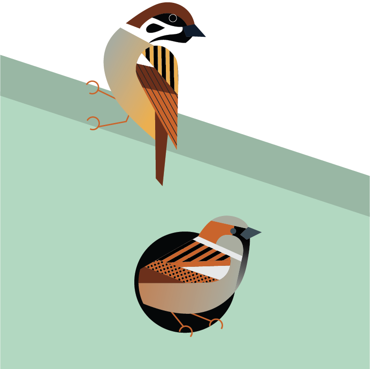 GRÅSPURV & PILFINK - Både pilfinken og gråspurven trives nært mennesker, både i byer og ute på bygdene. Det er ikke alltid så lett for disse artene å finne seg en plass å bo. Ved å henge opp en fuglekasse på husveggen hjelper du dem!