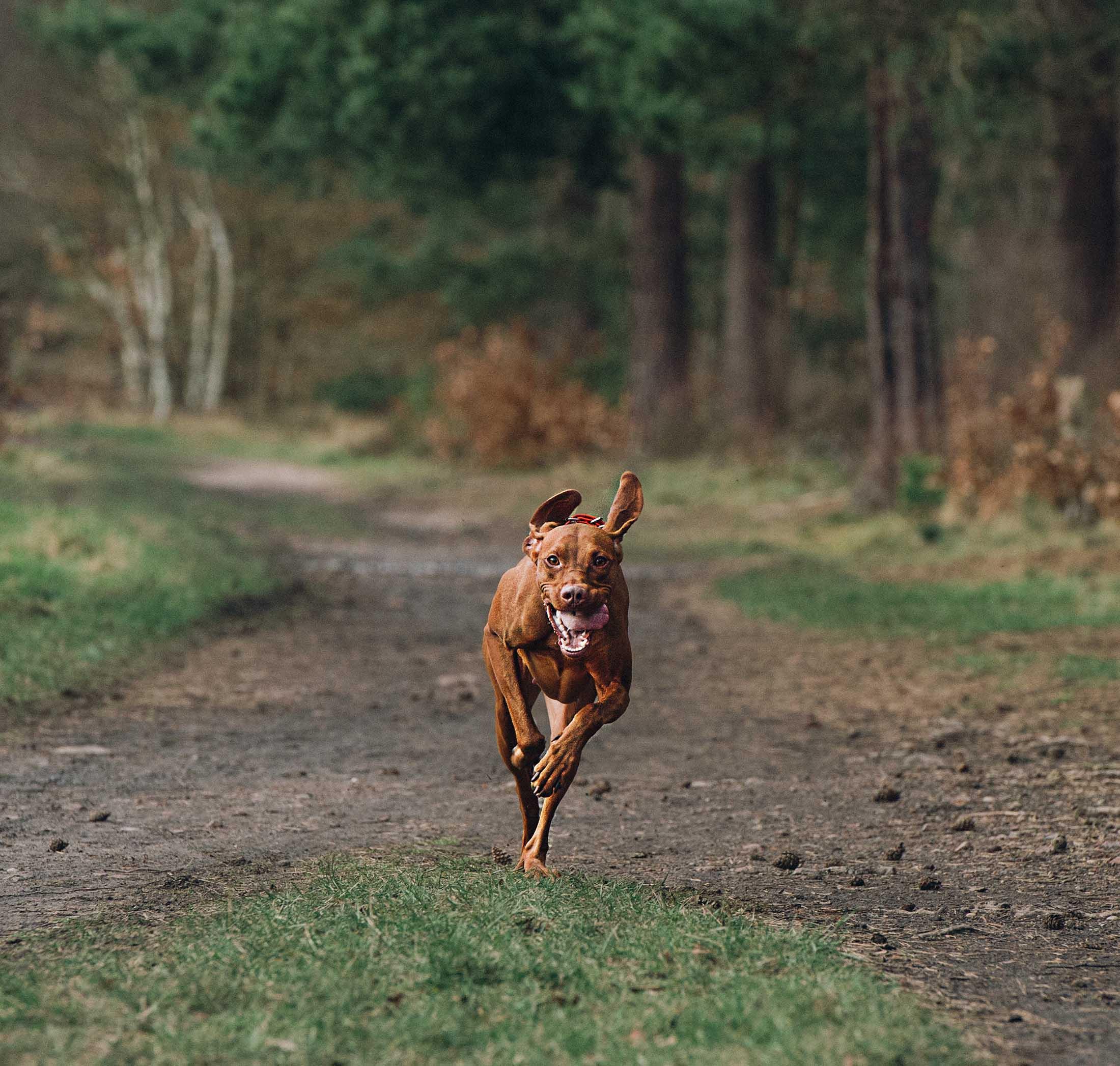 doncaster dog pet portrait photographer yorkshire.jpg