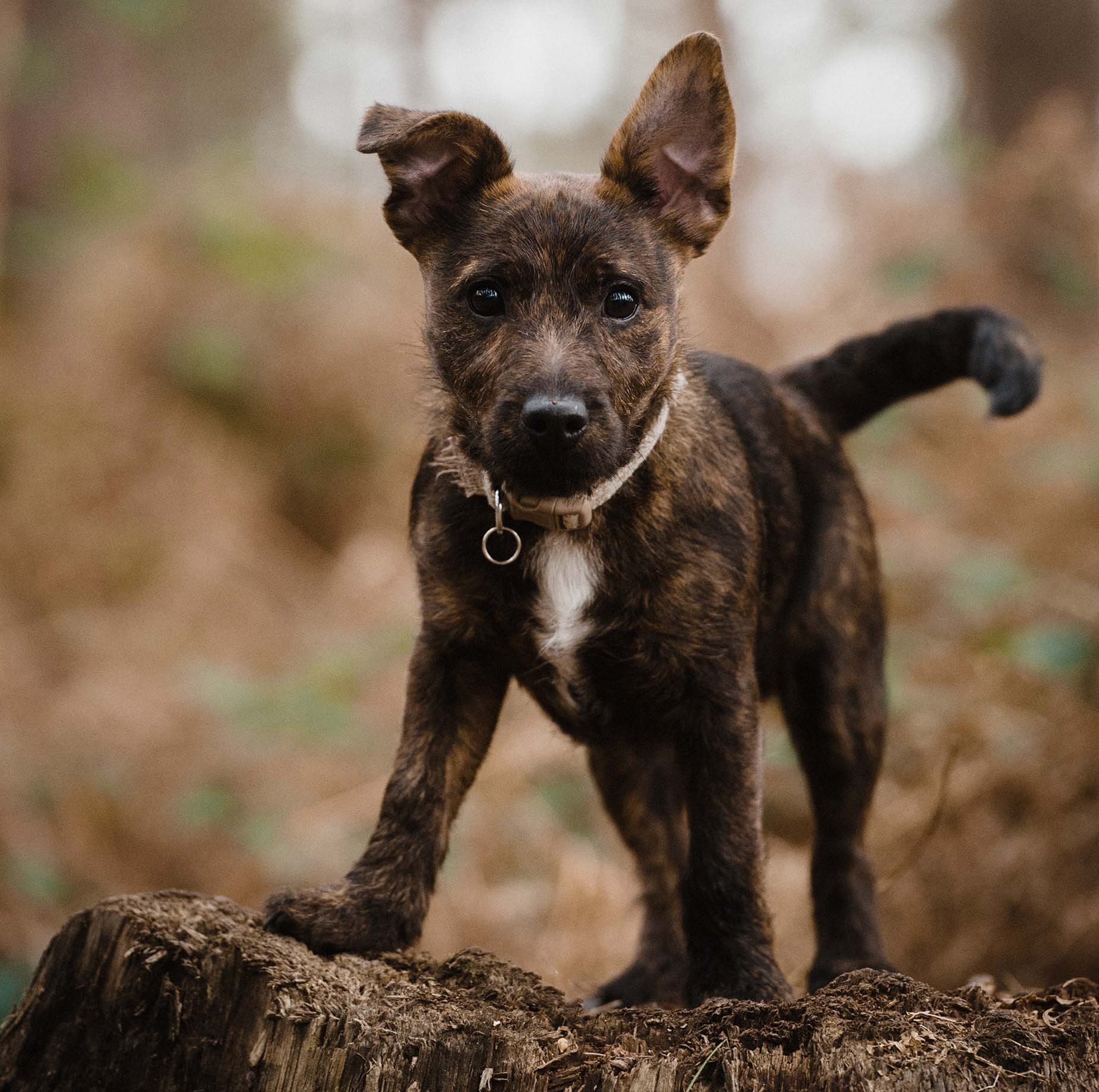 yorkshire dog pet photographer.jpg