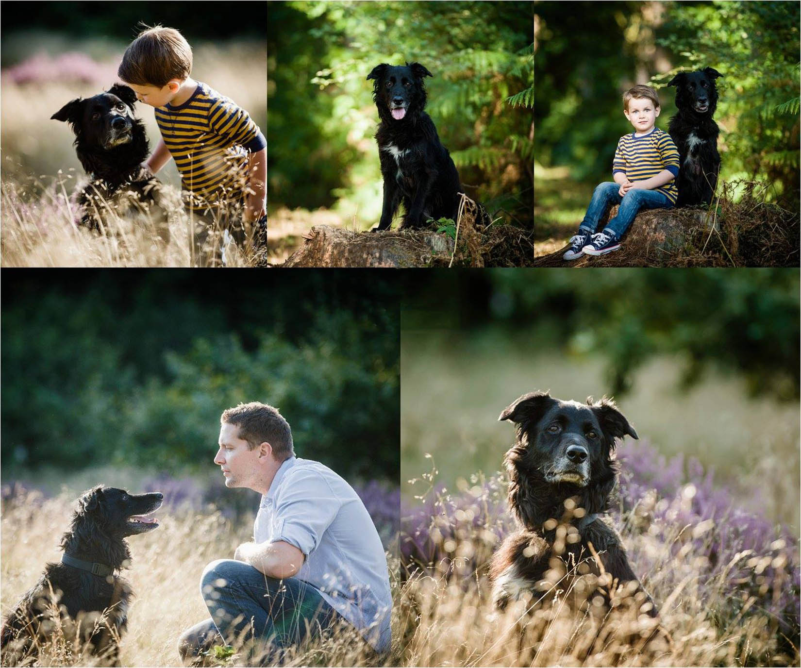 dog pet photographer doncaster yorkshire.JPG
