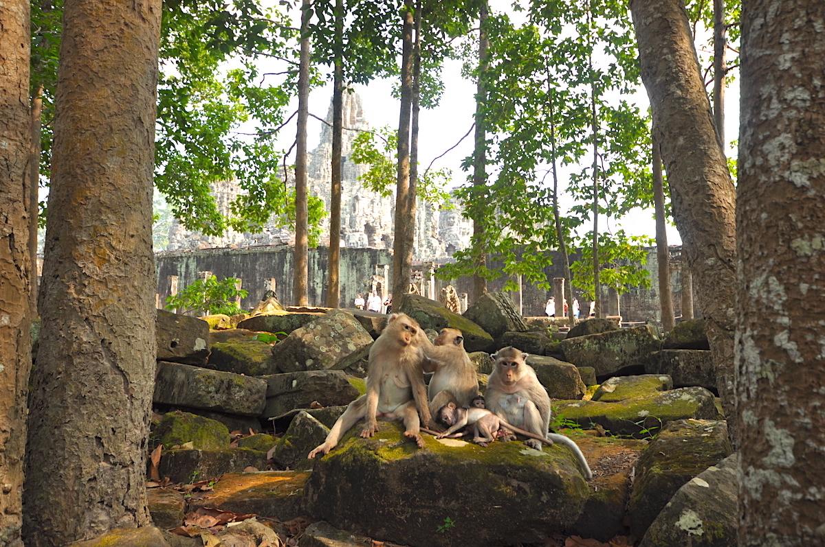Macacos posando para fotos na área externa de Bayon. Foto: Patti Neves