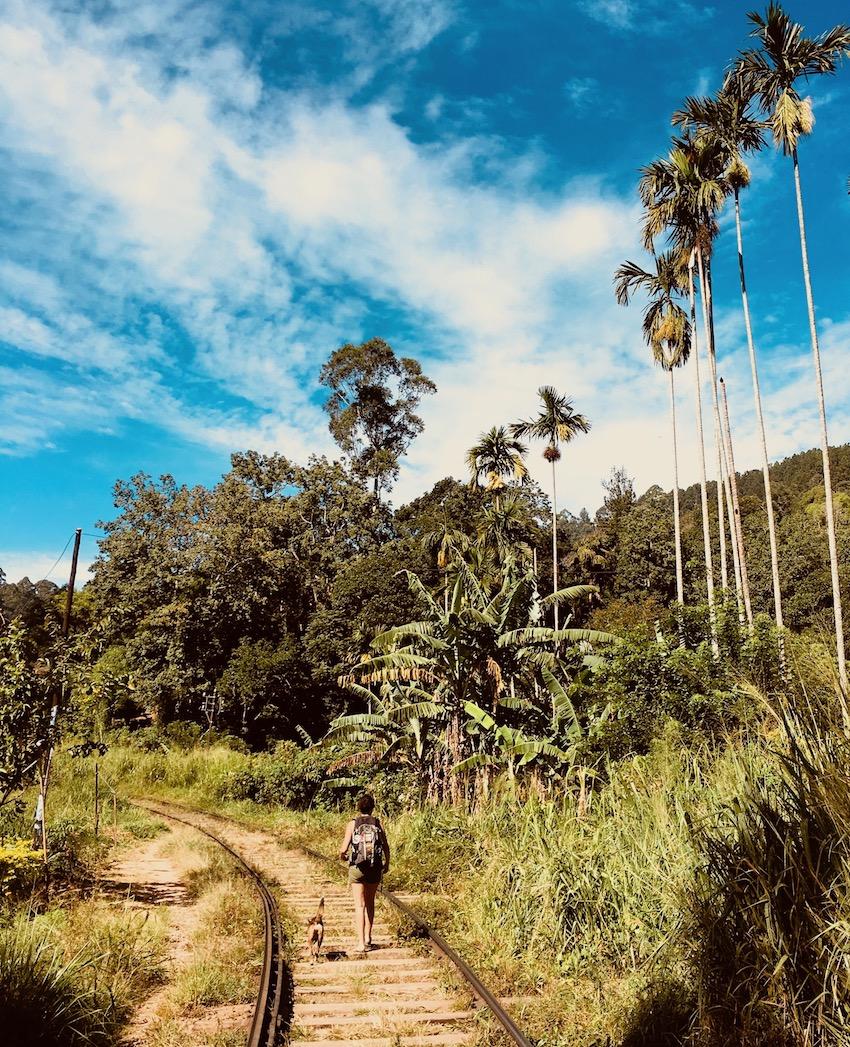 No caminho da roça. Ella Rock trek (Sri Lanka). Foto: David Mattatia