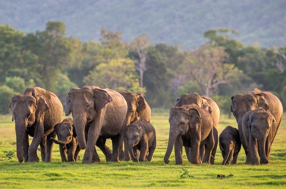 Elefantes de Mynneria. Foto:  TripAdvisor