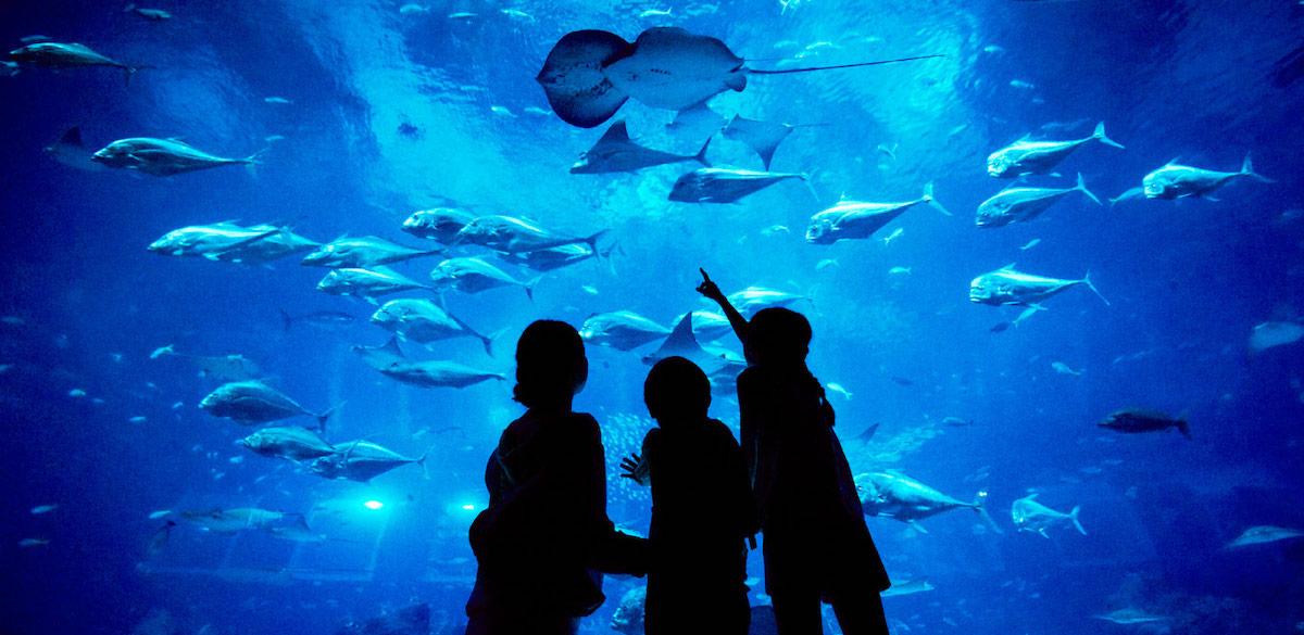 SEA aquarium @  Sentosa RWS