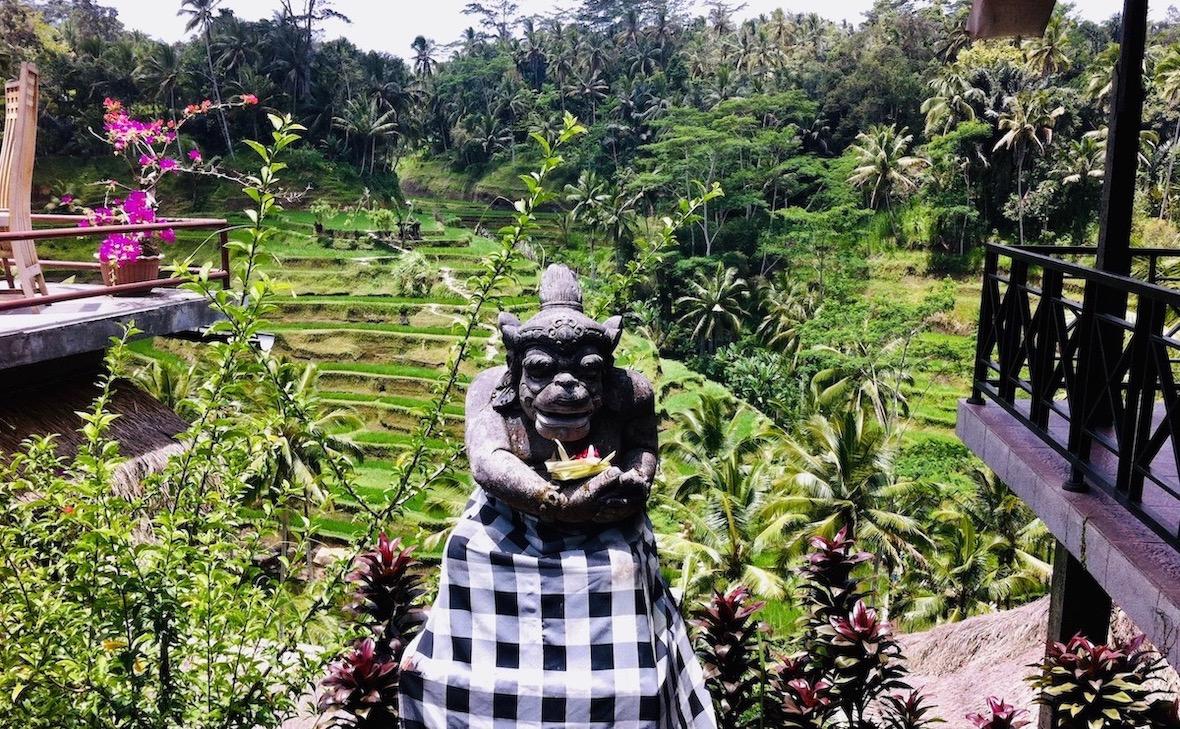 Rice terrace in Ubud. Photo: Patti