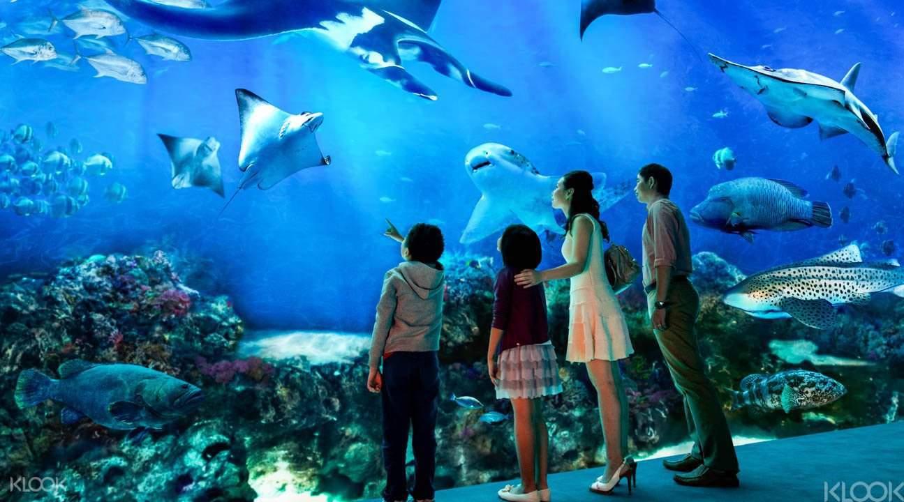 S.E.A Aquarium - O segundo maior aquário do mundo!