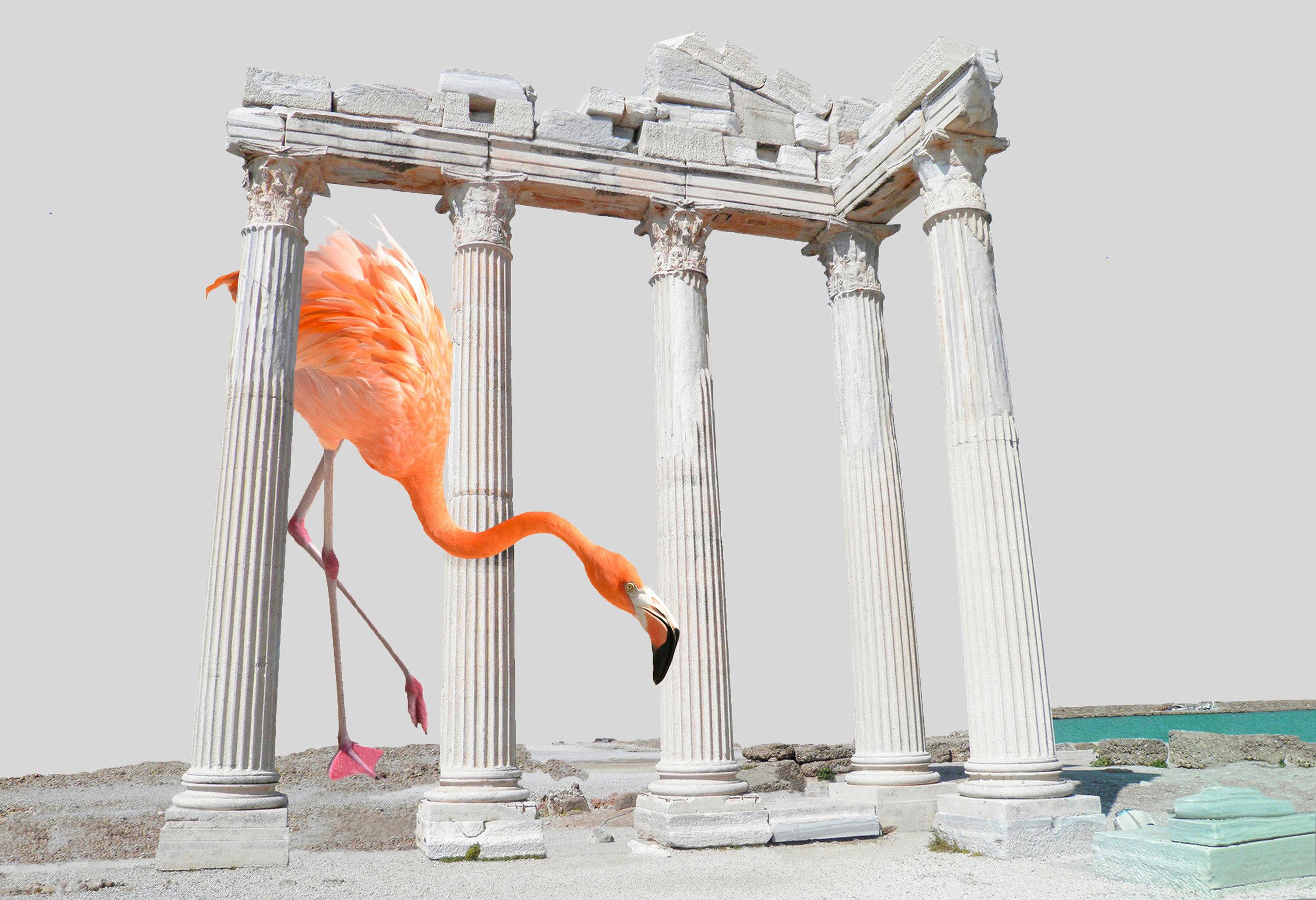 Flamingo_original.jpg