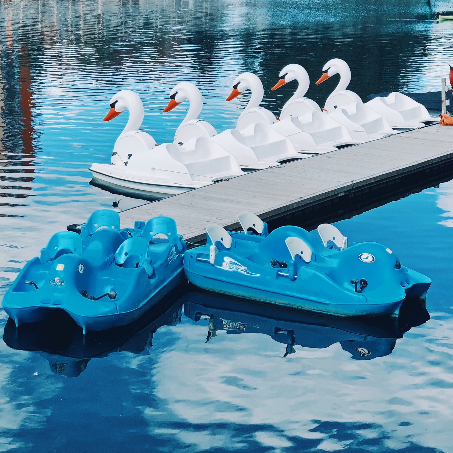 Swan Pedal Boats.jpg