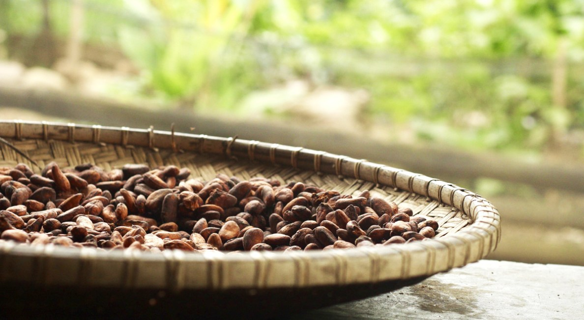 roasted_cocoa.jpg