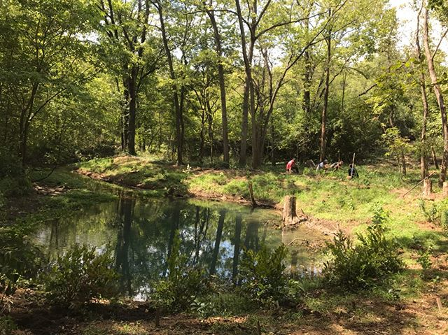 Yesterday's installation of native plants at McConnell Springs' Blue Hole was a big success. When small businesses, government agencies, universities and volunteers come together, we can  make good things happen. @geomancerpermaculture @oaklandfarmtrees
