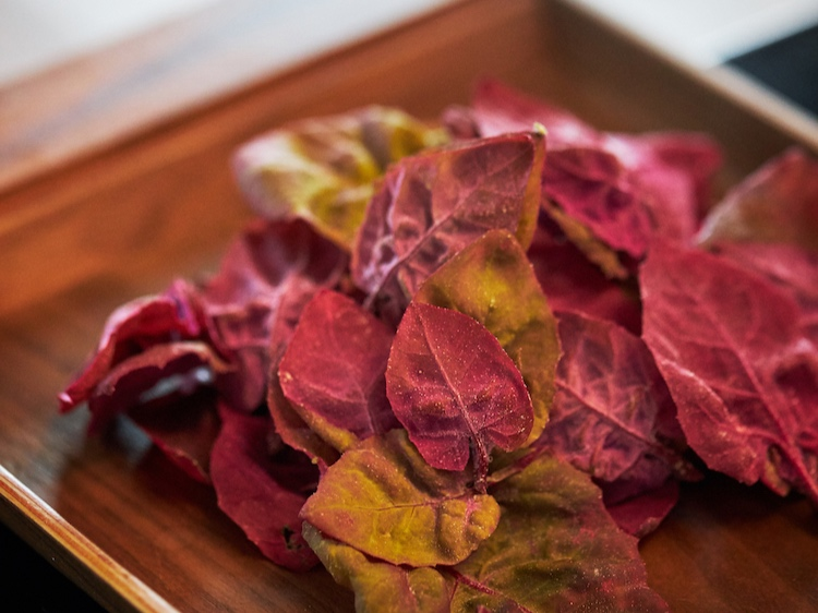 5280 | Move Over, Kale. Spigarello is the New Green on Denver's Top Tables - Esoterra Culinary Garden provides Front Range chefs with stunning, delicious, and totally arcane fruits, veggies, and herbs.