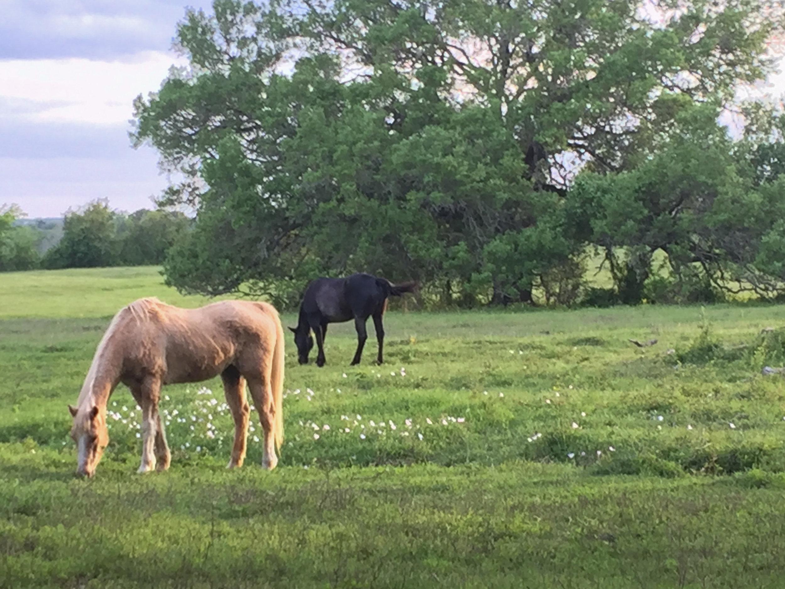 old oaks ranch location texas ranch