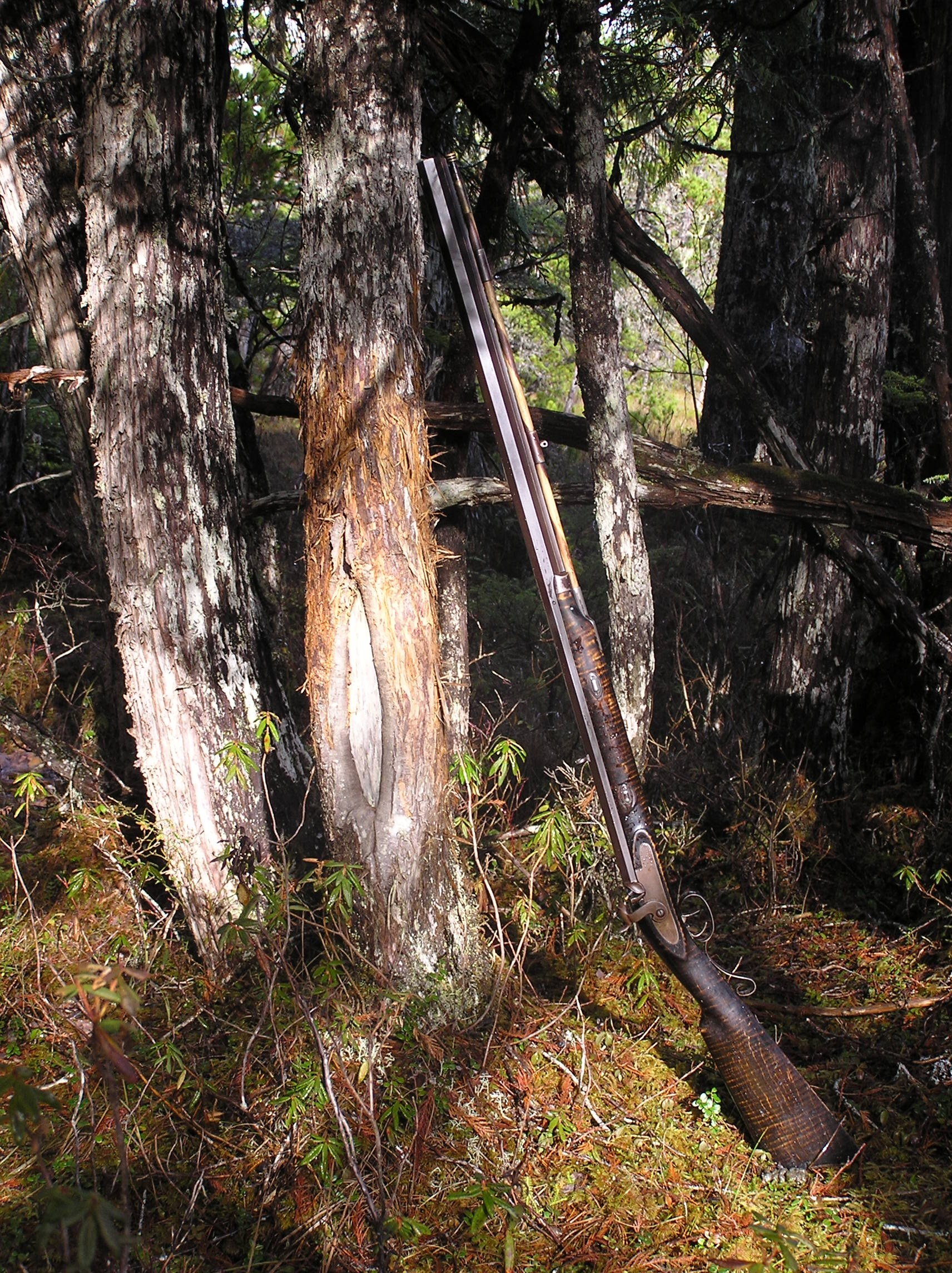 From the Deck Blog — The Sitka Black-Tailed Deer Coalition