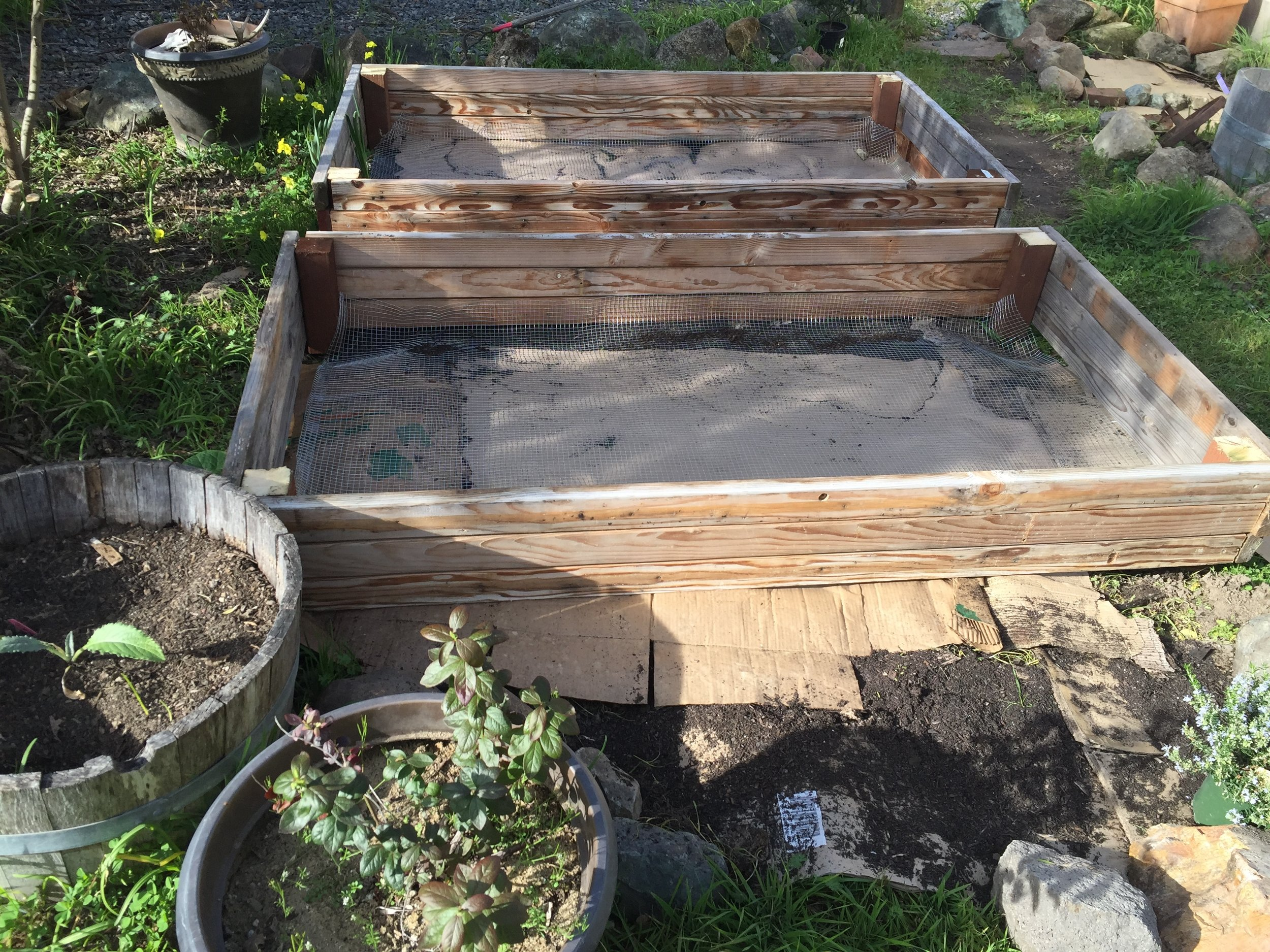 Garden boxes build from reclaimed wood. Sheet mulching and installation. Sebastopol, 2017