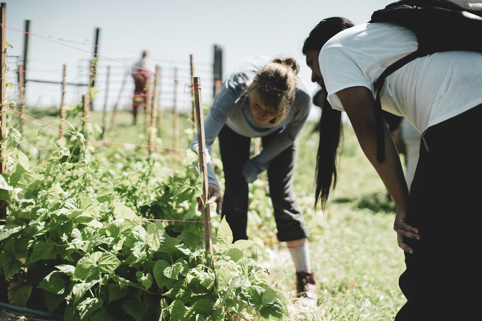 sponsor a garden - Feed the Community by sponsoring a Food hub with a donation of $5,000 or more