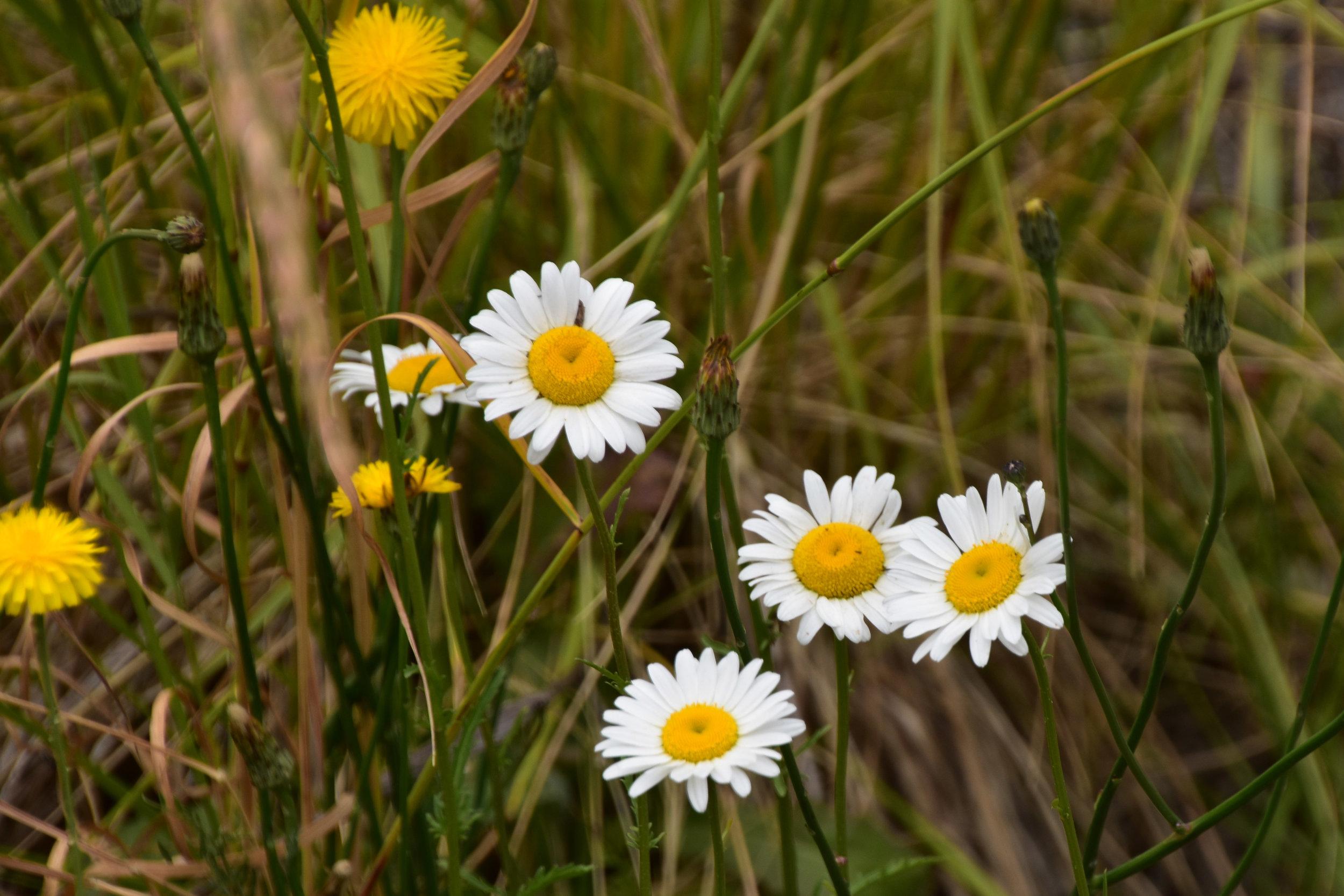 000_Flowers-1.jpg