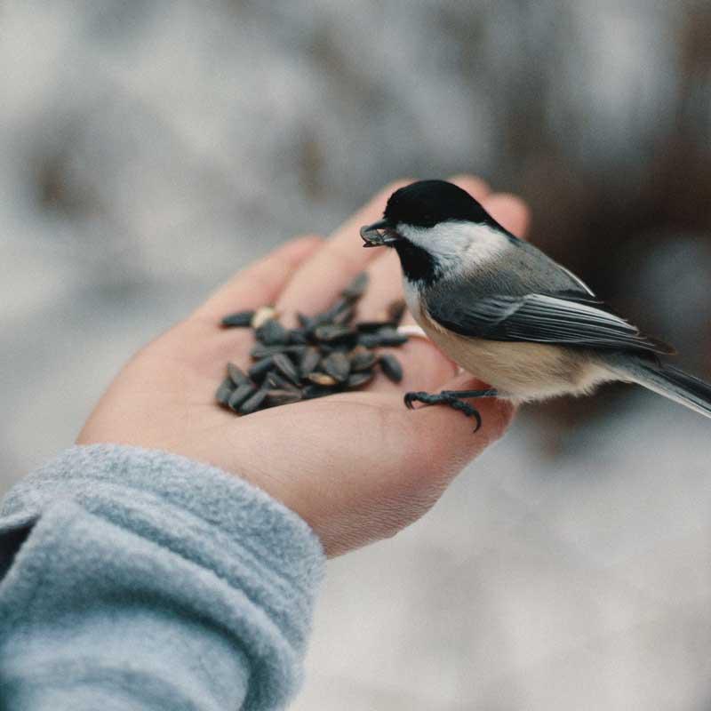 birds@800x.jpg