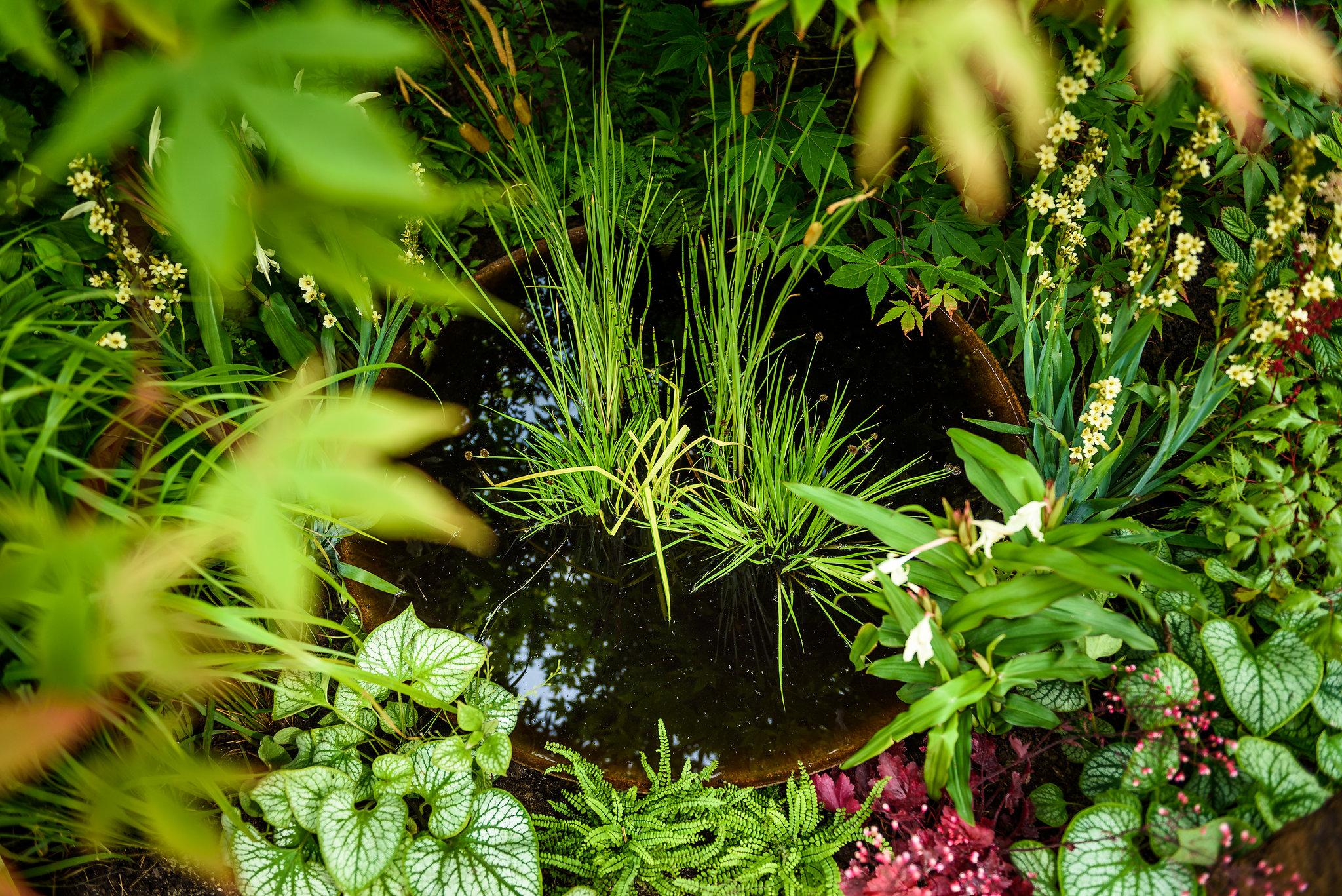 PC-GardenersWorld2018-044.jpg