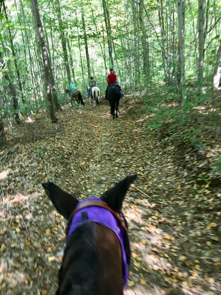 horses in the woods.jpg