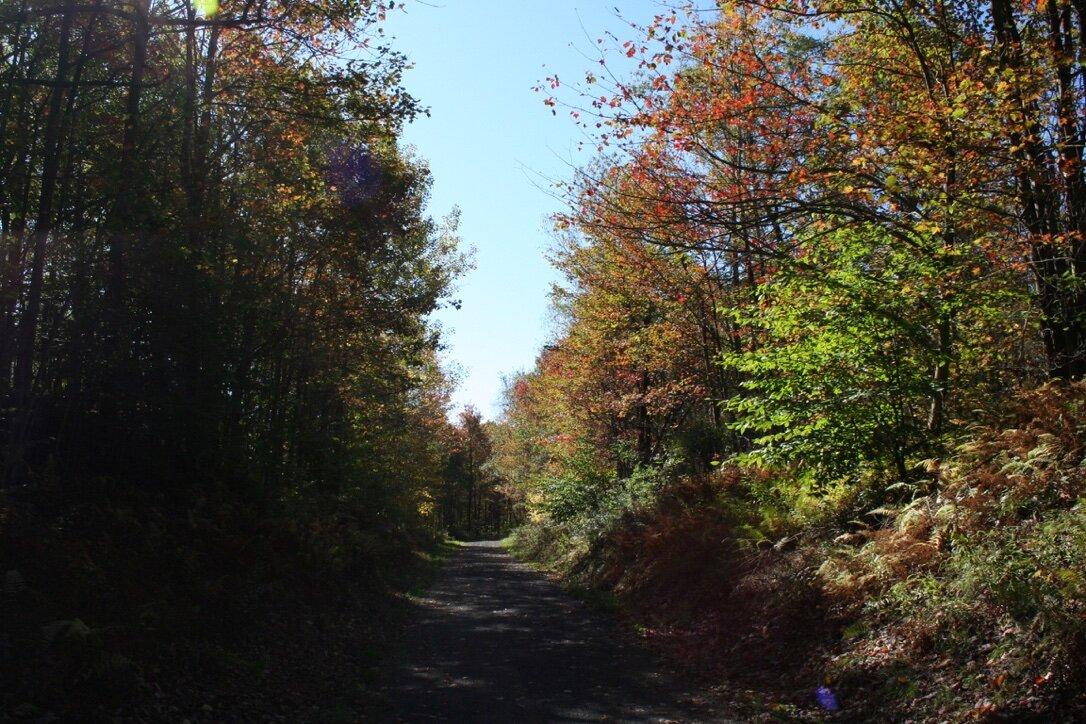 fall on the trail 2019.jpg