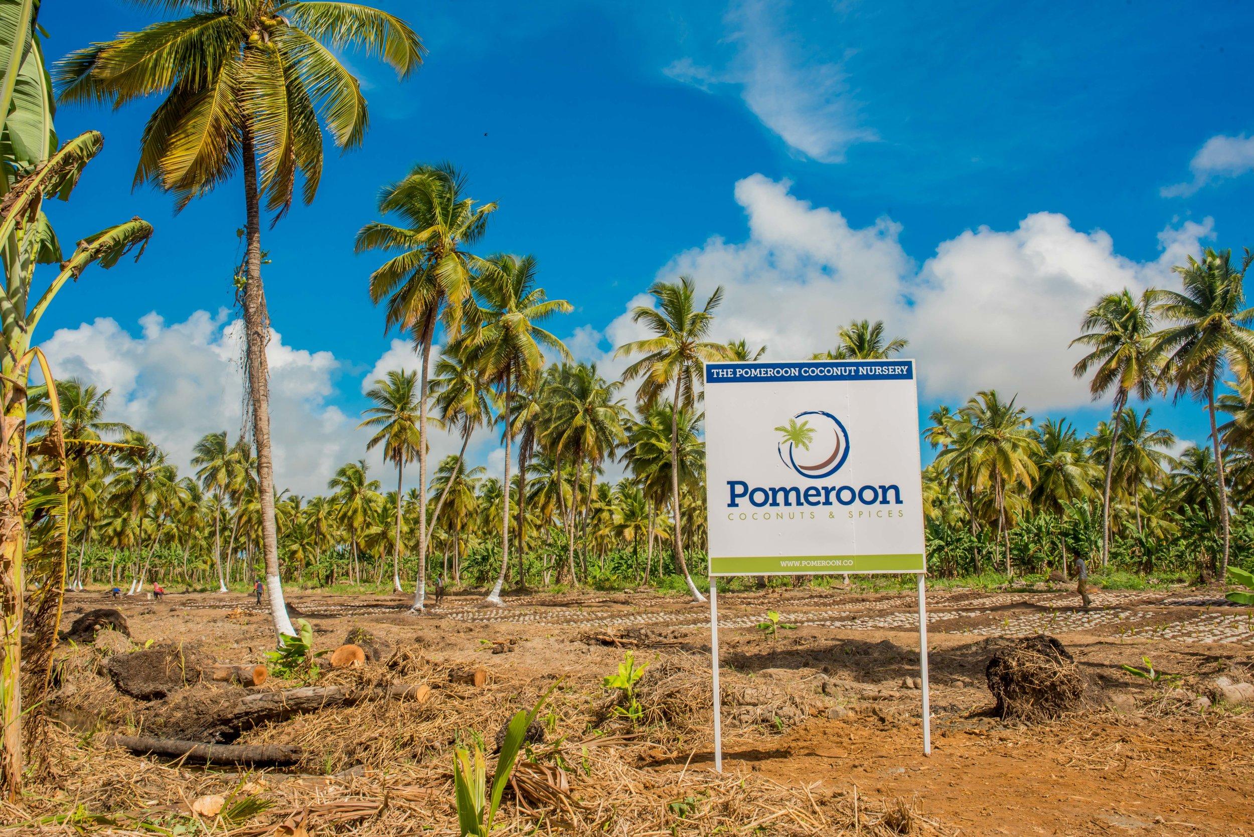 Coconut Nursery Pomeroon.jpg
