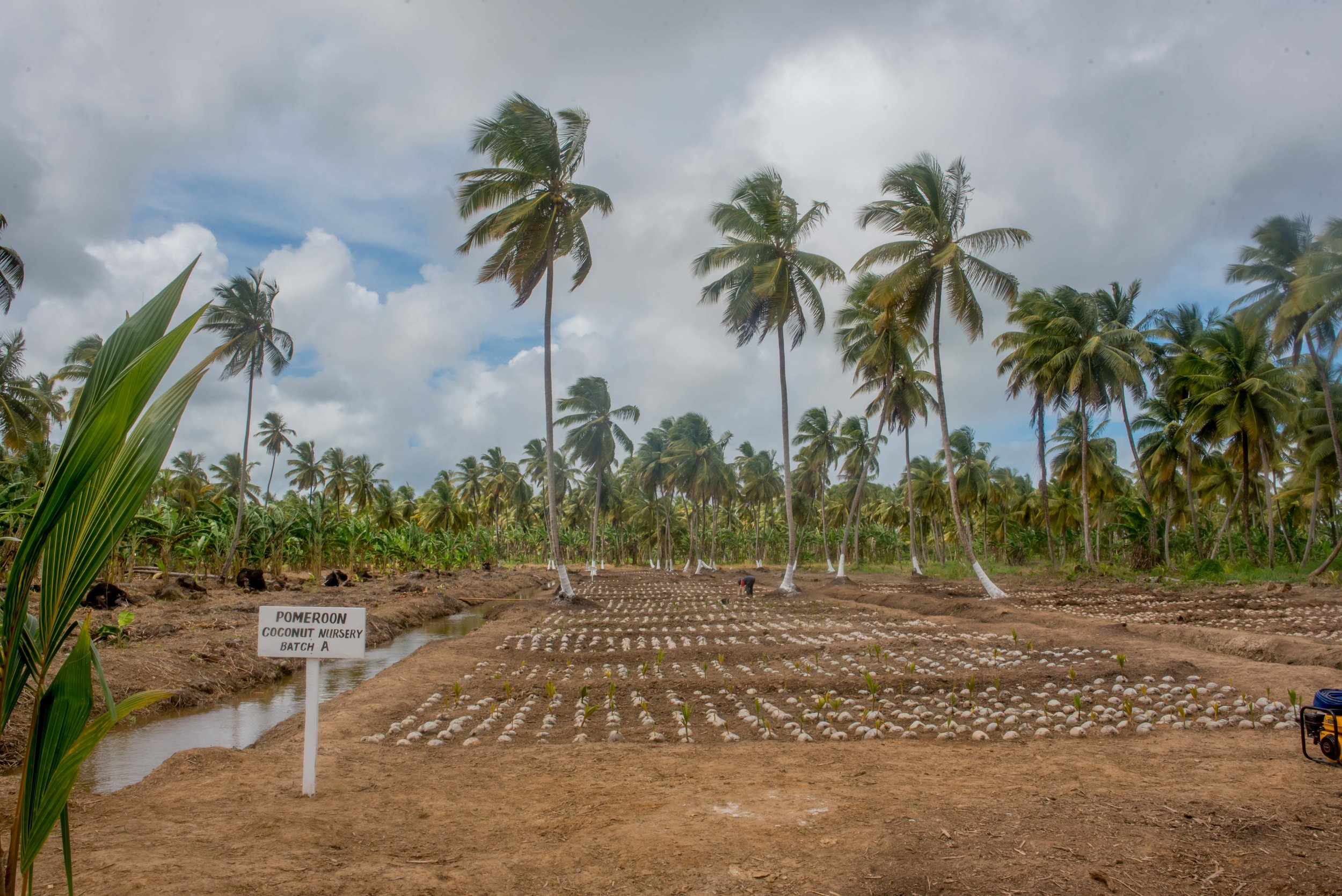 Our coconut seedling nursery transformed from this...