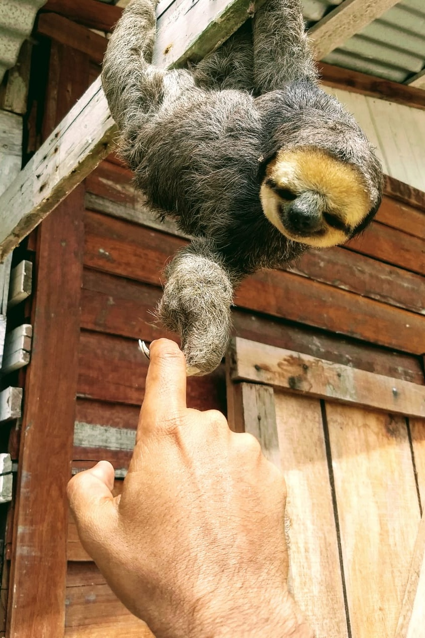 Guyana Sloth Rainforest