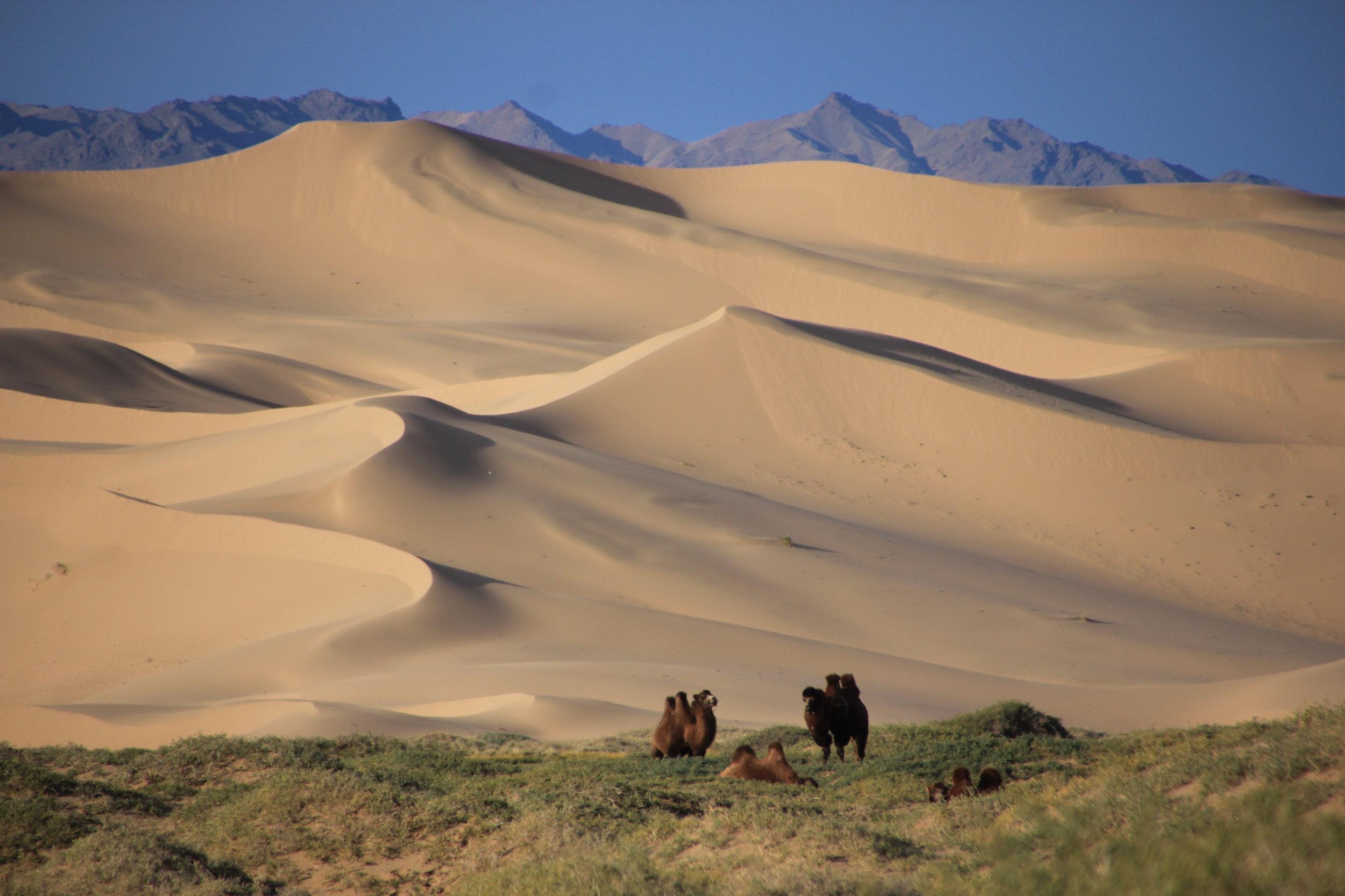 The Gobi