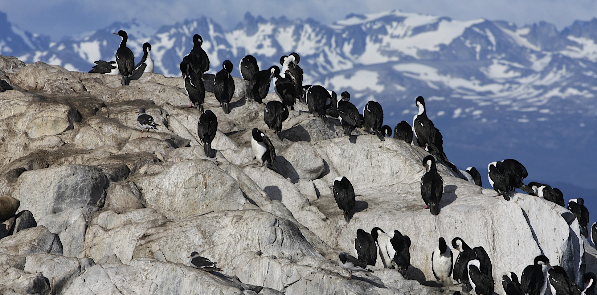 Mountains of Patagonia and the cormorants of the Beagle Channel