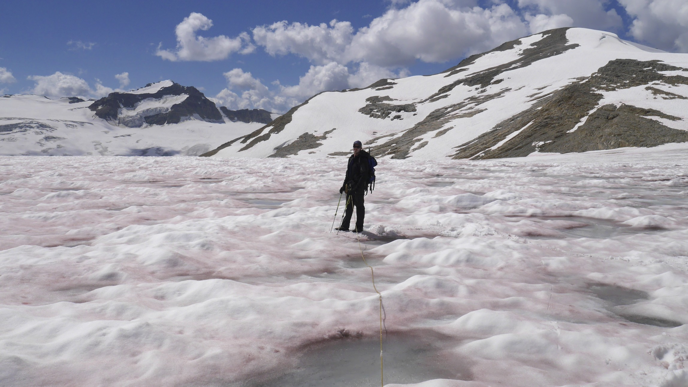 Pink snow on the Wapta Icefield