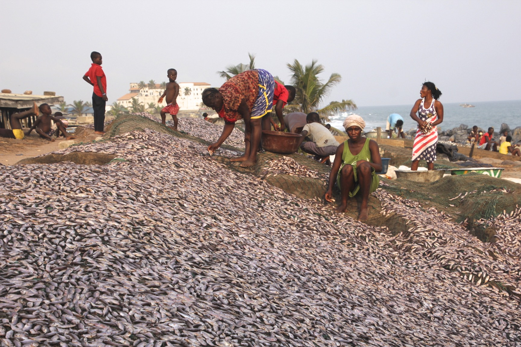 Drying fish in Elmina, Ghana; the Elmina slave castle is in the background